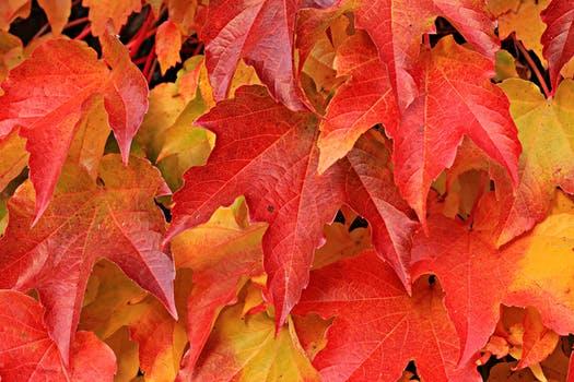 Как есента се отразява на работоспособността ни